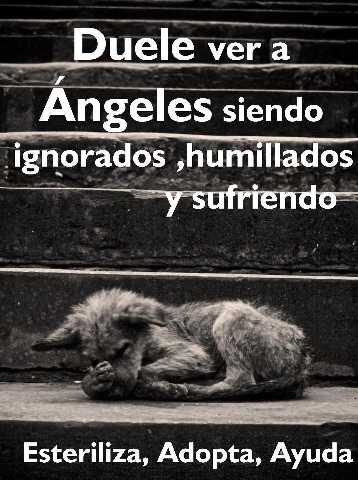 Angeles sufriendo.