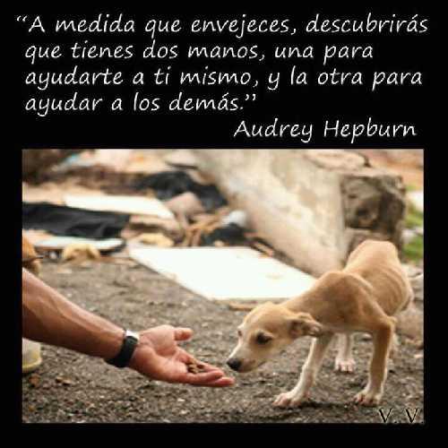 Las Buenas Acciones De Mario Torres Día 09 Ayudar A Los