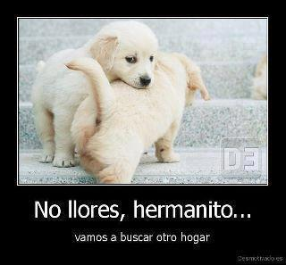 No llores hermanito.