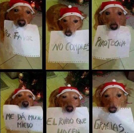 Por favor no compres pirotecnia.